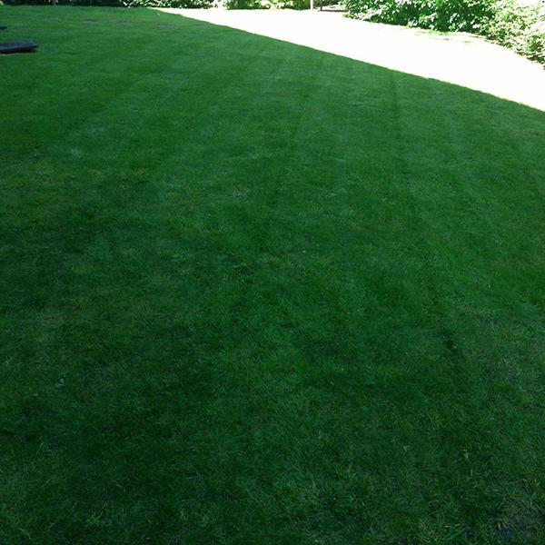 lawn scarification service