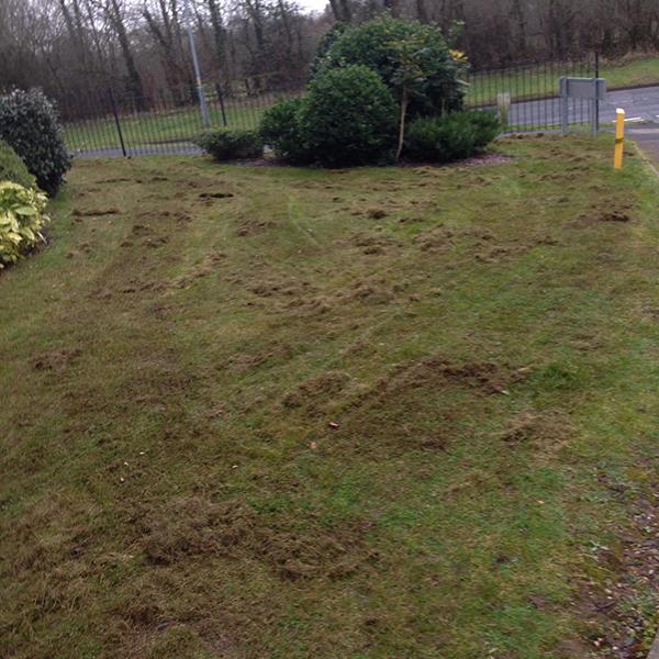 scarifying a lawn